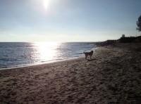 Ostsee: Strandnahes Häuschen für 2 – Hund erlaubt